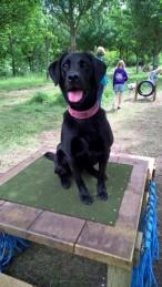 Tilly - Jemma's Dog
